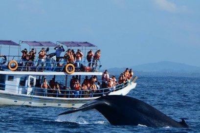 ทัวร์ศรีลังกา : ท่องเที่ยวธรรมชาติ ณ ประเทศศรีลังกา (UL)