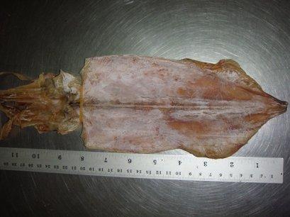 ปลาหมึกผ่า 8 นิ้ว