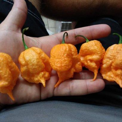"""พริกที่เผ็ดที่สุดในโลก สีพีช """"Peach Carolina Reaper Seeds"""""""