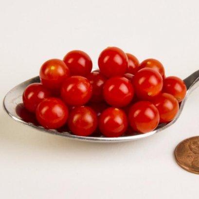 """เมล็ดมะเขือเทศเบอรี่ """"Teaspoon Tomato Seeds"""""""