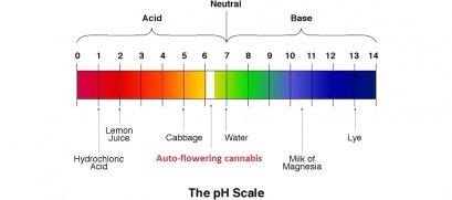 ค่า pH ในสระว่ายนํ้า
