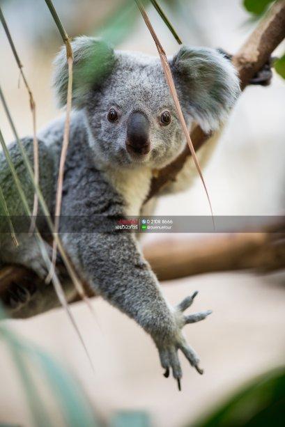(เที่ยวคุ้ม)ทัวร์ออสเตรเลีย ซิดนีย์ - เมลล์เบิร์น 6วัน 4คืน บินการบินไทย (TG)
