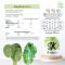 SK (Spinach+Kale) ผักโขม+ผักเคลผง
