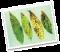 3 power  จุลินทรีย์กำจัดโรคพืช ไตรโค บีเอส  ฉีกซองพร้อมใช้ ไม่ต้องเพาะเชื้อ 100 g. Microorganism which controls plant diseases.