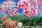 ชมซากุระขุนสถาน ดอยภูคา บ่อเกลือ ปัว น่าน   ทัวร์น่าน ทัวร์ปัว ทัวร์บ่อเกลือ ทัวร์ชมดอกนางพญาเสือโคร่งขุนสถาน ชมดอกชมพูภูคา