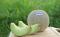 เมล็ด เพิร์ล เนื้อสีเขียว (100s)