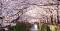 ทัวร์ญี่ปุ่น ZNRT01 ญี่ปุ่น โตเกียว นาริตะ ฟูจิ อิบารากิ [เลทส์โก นินจาซากุระ สปาร์ค]