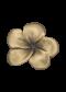 มือจับ -ดอกลั่นทมเล็กกลีบซ้อน
