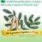 อึ่งคี้ (Nature's Way Astragalus Root)   ขนาด 1,410 mg. บรรจุ 180 แคปซูล