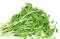 Pea sprouts โต้วเหมี่ยว