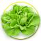 Butterhead lettuce ผักกาดบัตเตอร์เฮด