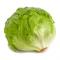Iceberg lettuce ผักกาดหอม