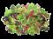 Mix Microgreen