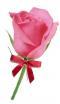 PINK ROSE WITH RIBBON 20 BAHT ดอกกุหราบพร้อมริบบิ้น
