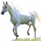 Horse oil Active