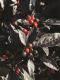 พริกประดับ Ornamental 100 เมล็ด