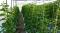 เกษตรสร้างชาติ คิโมจิ(Kimoji)